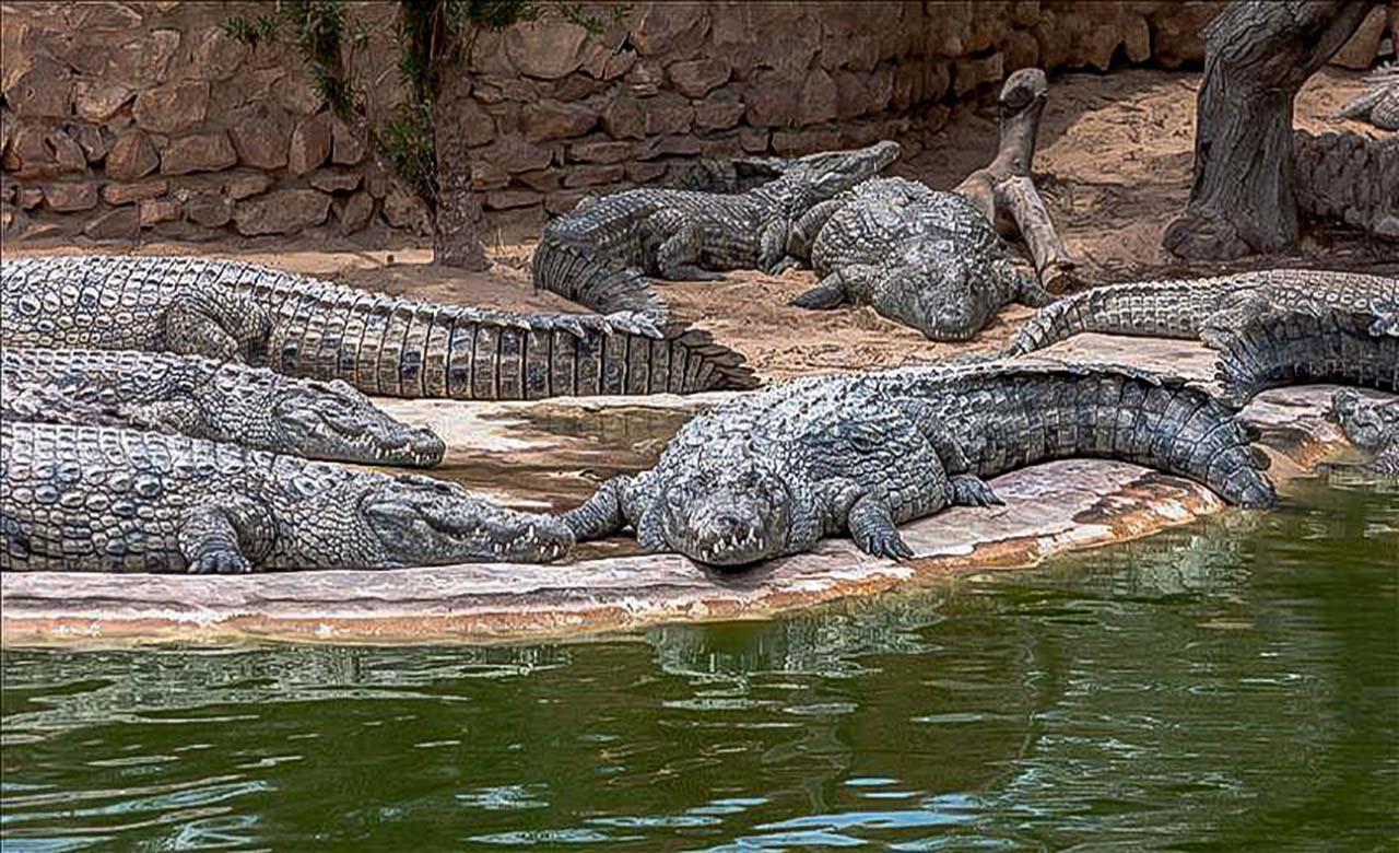 parc zoologique de DIPI