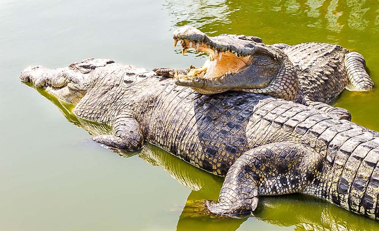 Lac aux crocodiles