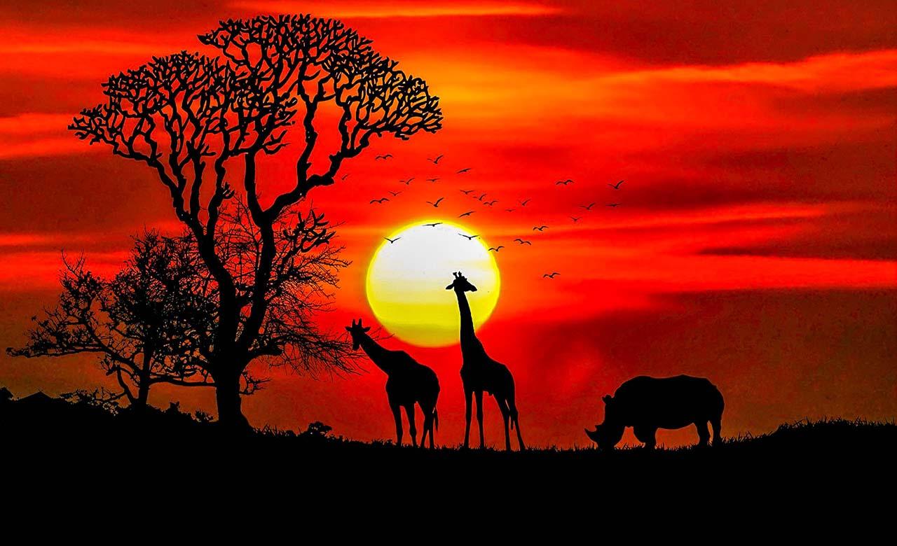 La belle afrique