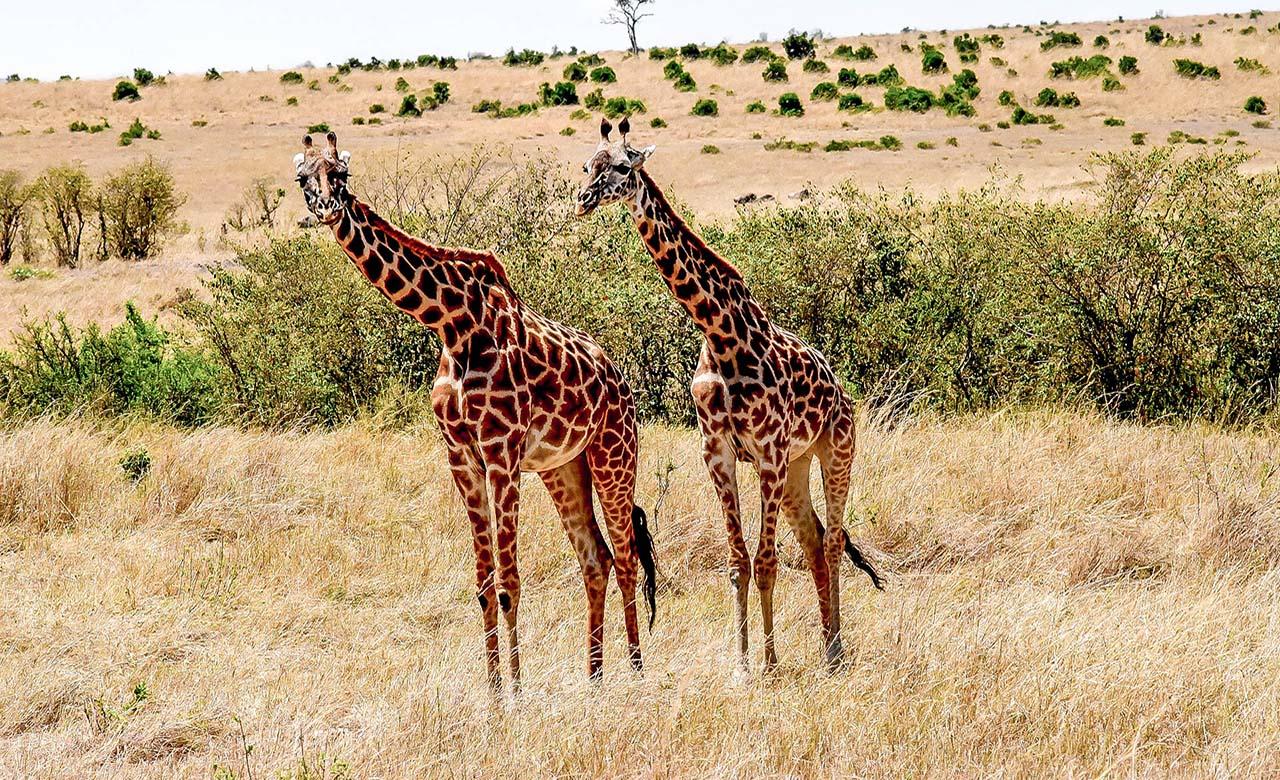 Paysage de savanne