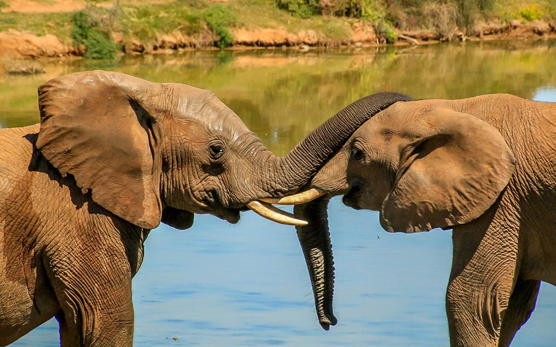 Pays des elephants